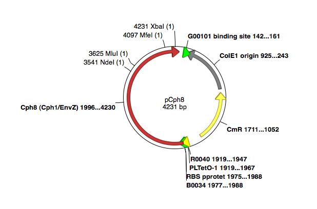 File:Cph8 unmodifiedplasmid.png