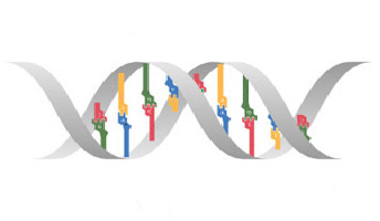 Image:DNA.png
