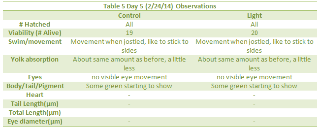 Day 5 observations.png