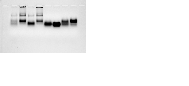 File:Experiment 1-4 cy3.png