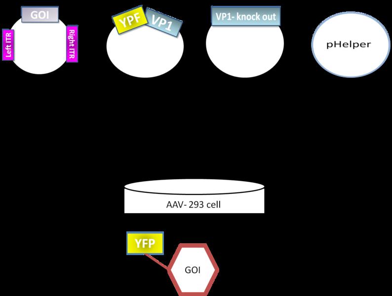 File:794px-Phelper prinzip.png