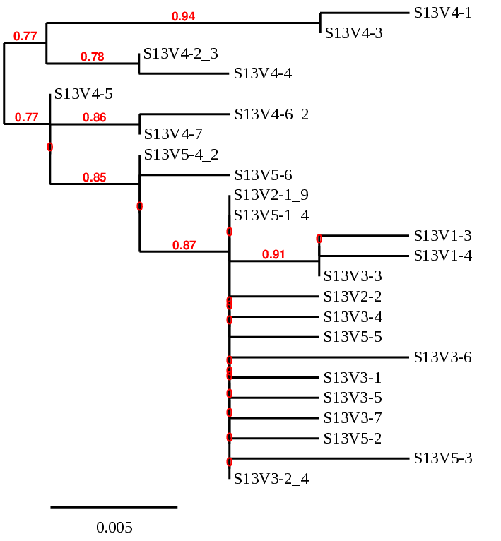 Non week5 act2part2-sub13phylogenetictree.png