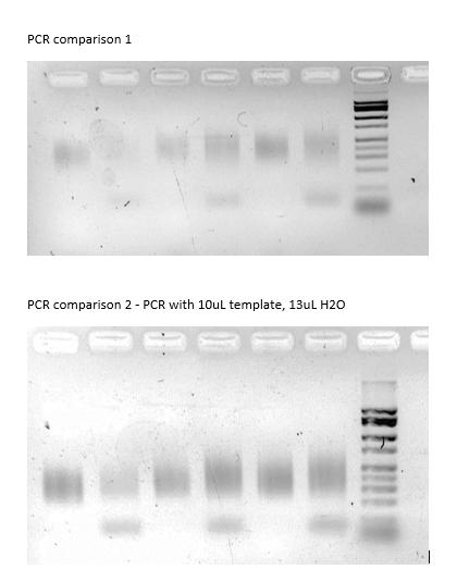 File:RADbirds-PCRs.png