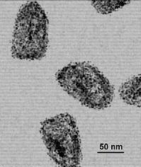 File:Rabiesvirus.jpg
