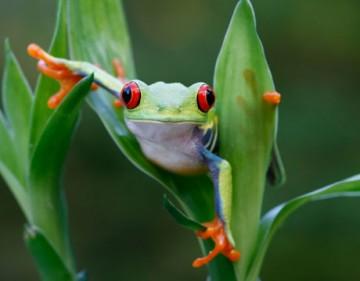 File:BME10student Frog.jpg