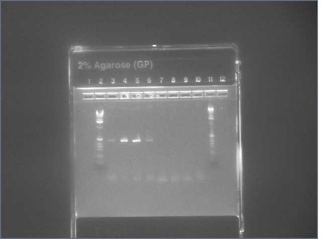 PCR VP16 Gal4DBD 7-30.jpg