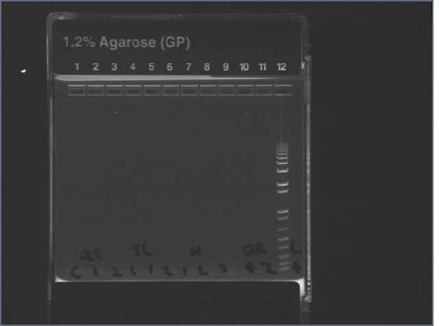 File:PCR fail 7606.jpg