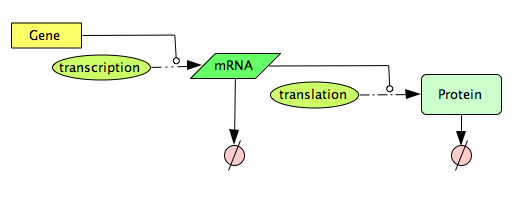 CellDesigner Constitutive Gene Expression Network.png