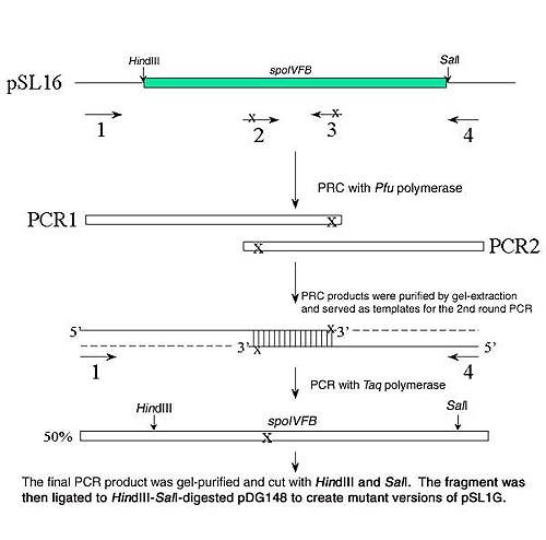 SOE PCR.jpg