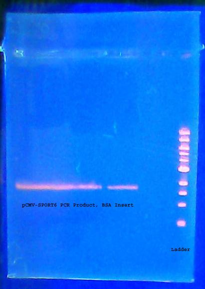 Gelpurificationinsert7.27.2011labeled.jpg