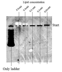 File:Lipid+field format.jpg