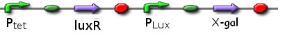 File:ICGEMS sys Ptet luxR Plux x-gal.PNG