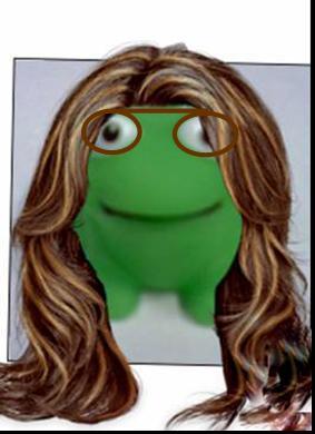 File:Merav frog.jpg
