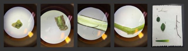 File:Plant samples lab.jpg