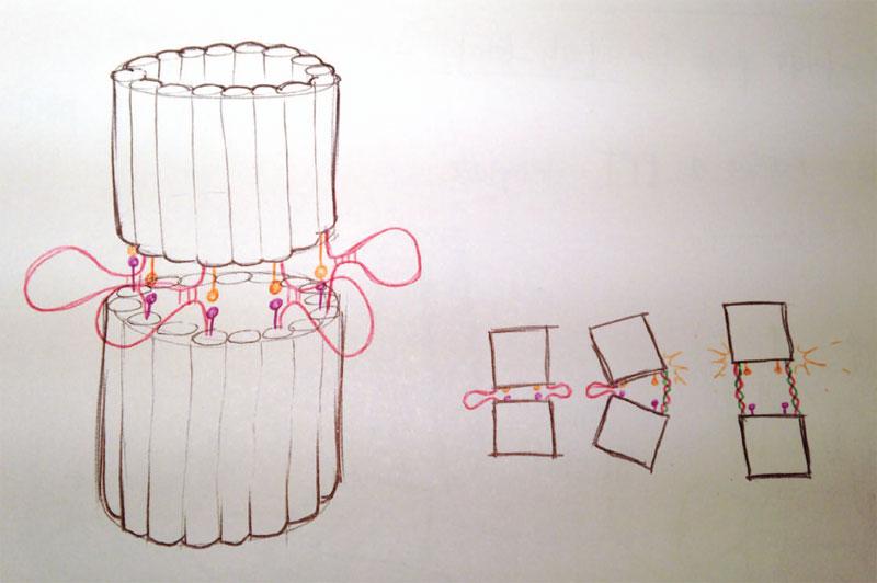 File:2014-EchiDNA-SKETCHBOOK-barrel-idea.jpg