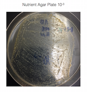 File:Nutrient 10-3.png