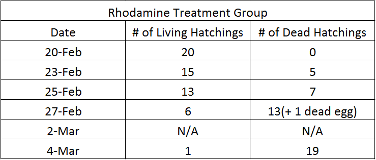 Rhodamine living and dead.png