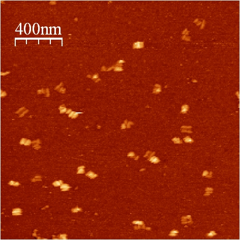 File:BM12 nanosaurs AFM Closed overview.jpg