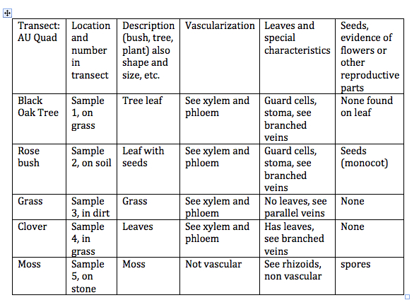 Image:Table Transect Plants.jpg