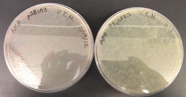 File:VN Vector Cultures.png