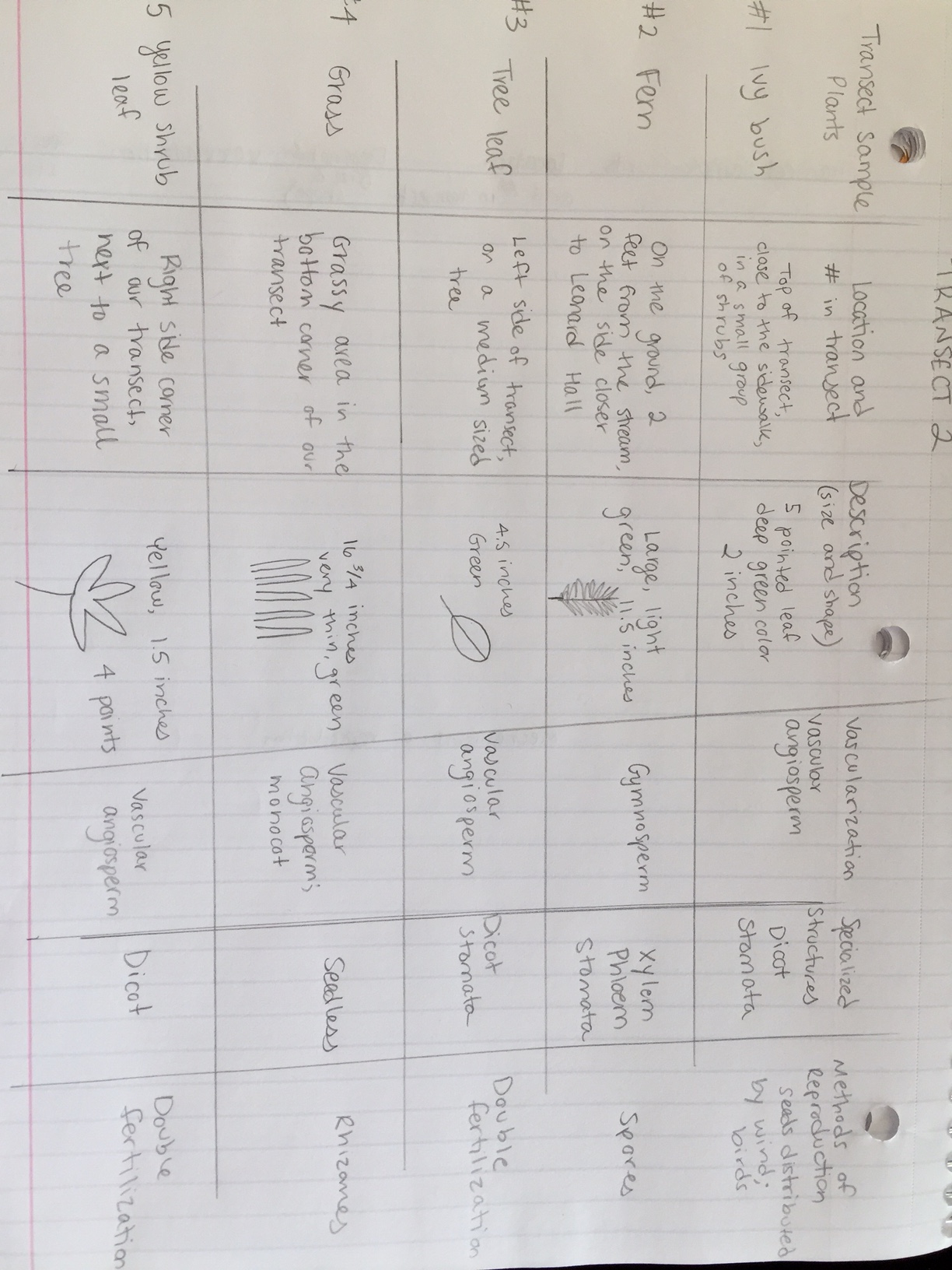 Chart for plantae and fungi lab.JPG