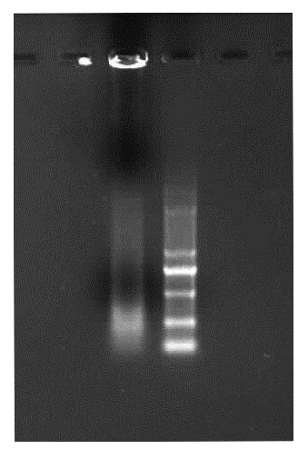 Figure3.1.7 1% agarose The momomer con centration=25nmol/L the other condition is the same to the Figure 3.1.6.