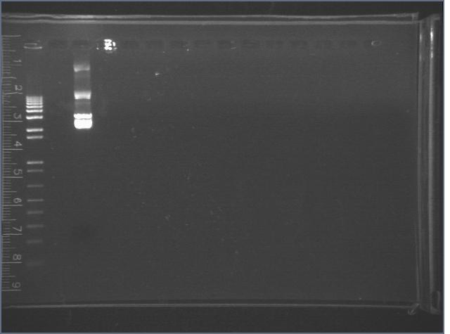 File:2006-8-4 X-P digest of BB J04450 earlier digest.jpg