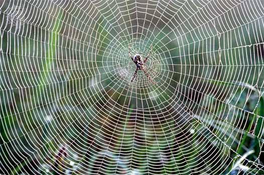 File:Spider-Silk.jpg