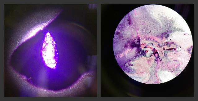 File:Bacteria 5-6.jpg