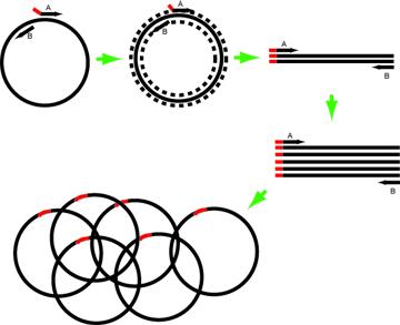 Horn Schematic