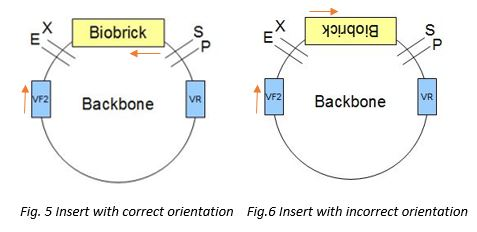File:Fig5to6.JPG