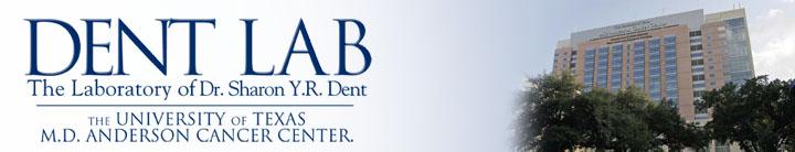 File:--Image-Dent Lab header.jpg--