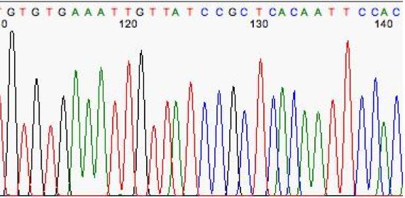 Chromatogram.jpg