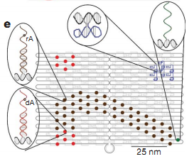 File:DNAmotor.png
