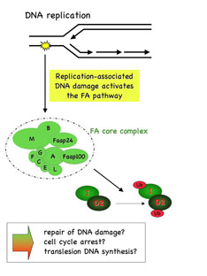Image:DNA Replication.jpg