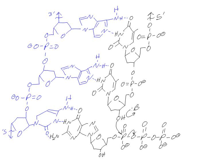 RLWM4D2DNA.jpg