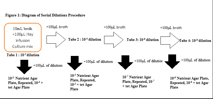 File:Serial dilution diagram.png