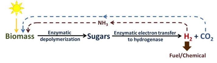 Biomass to H2.jpg