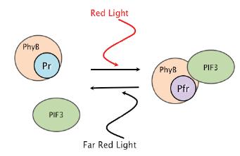 File:BME494 Group7 Diagram.png