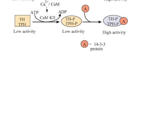 File:CamkII hydroxylase figure3.JPG