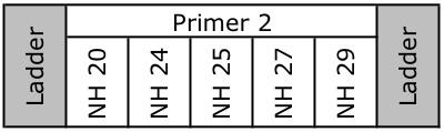 File:20110111 GelSchematicTR2.jpg