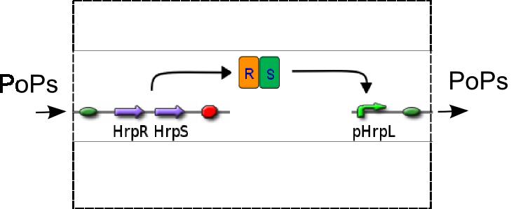 File:IC2007 HRP Dev1.png