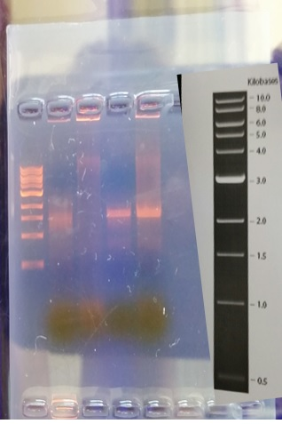 Microorganismpcr.jpg