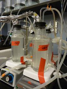 ChemostatCloseup 1.jpg