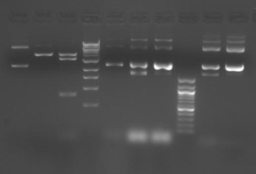 File:S10 M2D5 TR gel-Blue.jpg