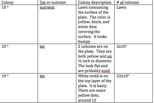 File:Colonydescription.jpg
