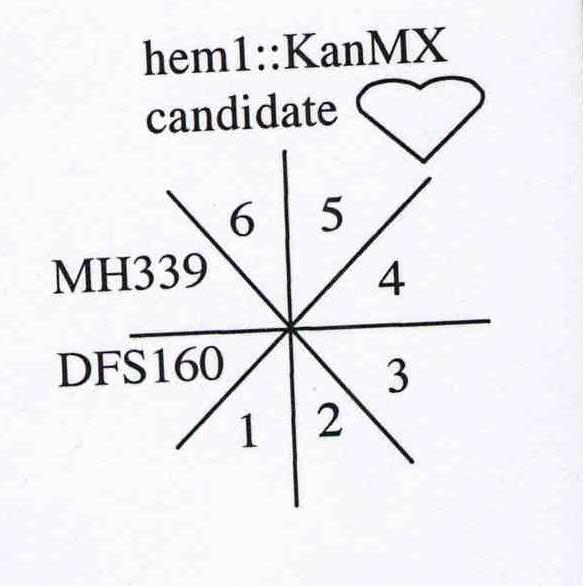 File:Macintosh HD-Users-nkuldell-Desktop-hem1 key.jpg