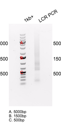 2015-11-04 PCR of LCR annotated.png