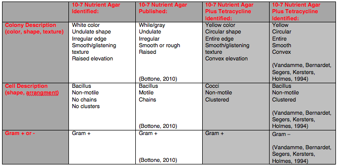 File:Bacterial chart.png