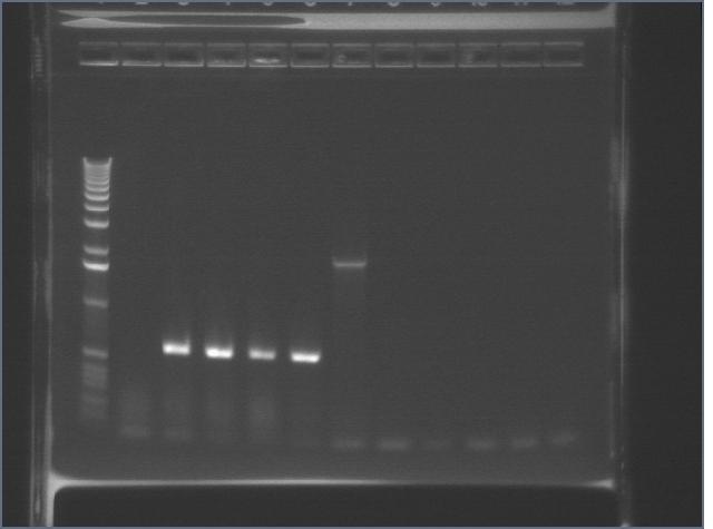 10-08 Mystery PCR MXHTA.jpg
